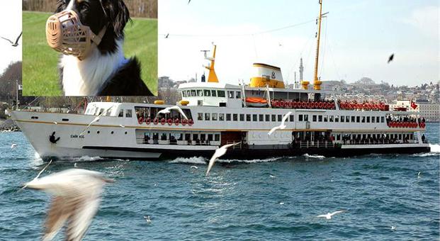 Vapurlarda köpekler ağızlıkla seyahat edebilecek