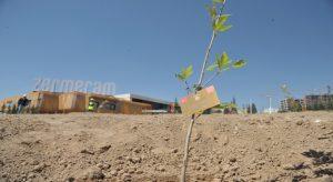 15 Temmuz Çınarları Zermeram'da büyüyecek
