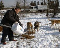 İBB, sahipsiz sokak hayvanlarına beslenme desteği veriyor