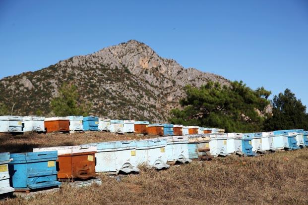 Kimyasal ilaçlama arı kolonilerini yok ediyor