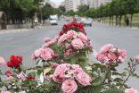 Beylikdüzü, güllerle bezendi