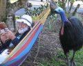 Kanada'da Cassowary kuşu tırnaklarıyla sahibini öldürdü