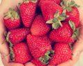 Hormonlu çilek ve domates erken ergenlik sebebi