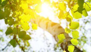 Karbon Saydamlık Projesi'nden Valmet'e küresel liderlik unvanı