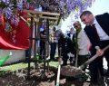 Üsküdar Belediyesi'nden 12. Geleneksel Mor Salkım Şenliği