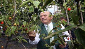 İstanbul'a 10 milyon ağaç ve 60 milyon m2 yeşil alan