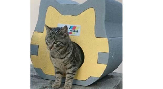 Kediler üşümesin diye Austrotherm'den ısı yalıtımlı kedi evleri