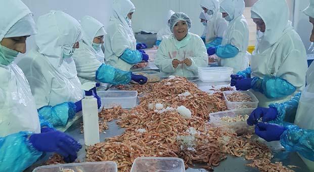 Erkekler denize, kadınlar üretime açılıyor