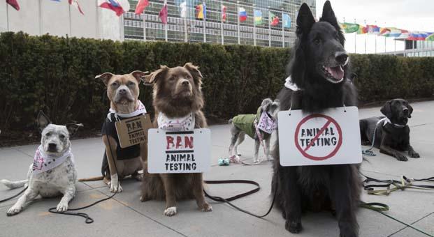 Köpekler havyan deneylerini durdurmak için protesto etti