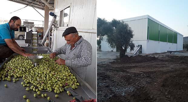 Milas zeytininin bütün güzelliği bu tesiste işlenecek