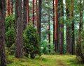 Adel Kalemcilik, ormanların gelecek nesillere aktarılmasına katkıda bulunuyor