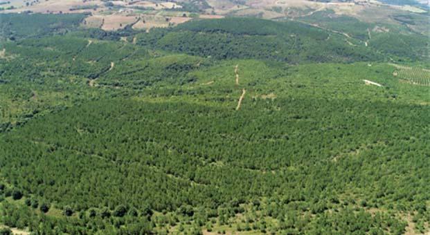 ENAT ile 2000 futbol sahası alan ağaçlandırıldı