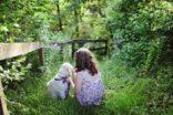 Gelecek güneşli günler için hayvan dostu oteller