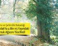 Zonguldak'ta 4 Bin 113 Yaşındaki Porsuk Ağacı tescillendi