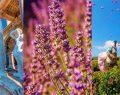 Çiçek kokuları eşliğinde binyılların mirası SAGALASSOS