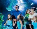 Madame Tussauds, SEA LIFE ve LEGOLAND Discovery Centre İstanbul'da bayramda da eğlence devam ediyor
