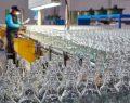 Şişecam Topluluğu'ndan 240 milyon TL'lik yatırım