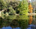 Orman ve su hayattır