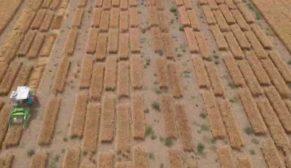 Tekfen Tarım susuzluk kaynaklı kıtlık riskine karşı arpa bitkisini ıslah edecek