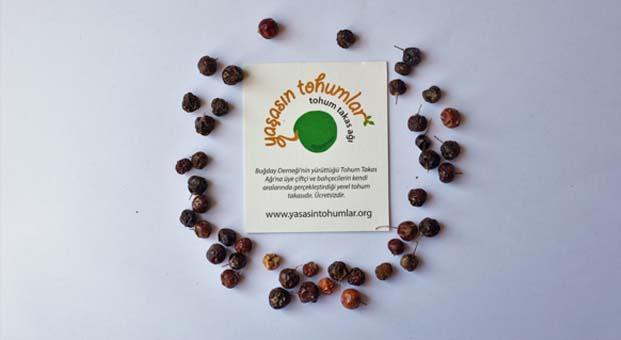 Yerel tohumlarla ilgili düzenlemenin getirdiği yenilikler, sorunlar ve belirsizlikler